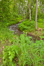 Meandering river in forest Stock Images