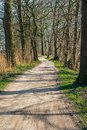 Meandering sandy path between tall trees Royalty Free Stock Photo