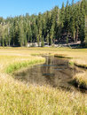 Meandering stream through mountain meadow the clear water flows in a path a grass surrounded by the forest at lassen volcanic Royalty Free Stock Photos
