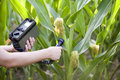 Measuring radiation levels of maize Stock Image