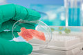 Meat grown up in culture dish cultured laboratory conditions from stem cells Royalty Free Stock Photography