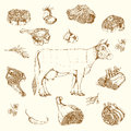 Meat Hand Drawn Elements Set