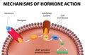 De hormona acción