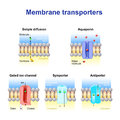 Mechanisms for the transport of ions and molecules across cell m Royalty Free Stock Photo