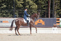 Medalist marina aframeeva horse named vosk international dressage in international park rus vivat russia orlovo moscow region Royalty Free Stock Photography