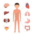 Medical diagram human organs