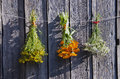 Medical herbs bunches on old wooden farm wall Royalty Free Stock Photo