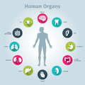 Medical human organs icon set with body in the middle Royalty Free Stock Photo