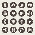 Medical icons human organs Royalty Free Stock Image