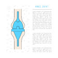 Medical illustration knee joint
