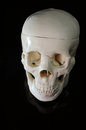 Medical learning skull laying black background Royalty Free Stock Photography