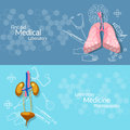 Medical research internal human organs banners Royalty Free Stock Photo