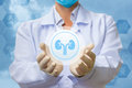 Medical worker shows the kidney icon . Royalty Free Stock Photo