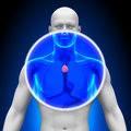Medical x ray scan thymus imaging Royalty Free Stock Photo