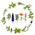 Medicinal and Culinary Herbs Royalty Free Stock Photo
