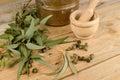 Medicinal eucalyptus still life displaying as a natural medicine ingredient Stock Images