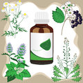 Medicinal herbs  with bottle, vector illustration Royalty Free Stock Photography