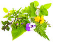 Medicinal herbs and globules on white Royalty Free Stock Image