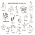 Medicinal herbs for hair loss treatment Royalty Free Stock Photo