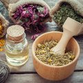 Medicinal herbs in hessian bags, wooden mortar of dry chamomile buds and essential oil on wooden table. Royalty Free Stock Photo