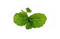 Medicinal mint on white background Stock Photos