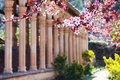 Medieval cloisters and cherry blossoms in front of in spain Royalty Free Stock Images