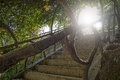 Medieval stairs with vegetation Royalty Free Stock Photo
