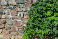 Medieval stone wall and green hedge Royalty Free Stock Photo