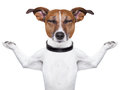 Meditating dog Royalty Free Stock Photography