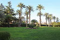 Mediterranean garden cultivated with palms and green grass Royalty Free Stock Images
