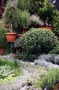 Mediterranean herbs in pots lavender and sage some such as lavender for example can be grown the stalk shape and very Royalty Free Stock Images