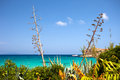 Mediterranean landscape from the island of pianosa Stock Image