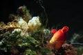 Mediterranean reef underwater close up Royalty Free Stock Photo
