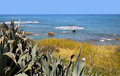 Mediterranean shoreline with vegetation. Royalty Free Stock Photos