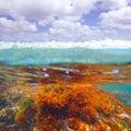 Mediterranean underwater seaweed algae in denia javea alicante spain Royalty Free Stock Image