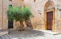 Mediterranean village with olive tree