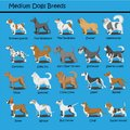 Medium Dog Breeds Dog cute Cartoon Design Vector puppy dog Cartoons Design