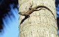 Medium Lizard In Wild Nature O...