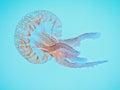 Medusa jellyfish of the atlantic ocean Stock Image