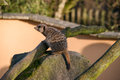 Meercat on a rock sat in zoo Stock Image