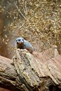 Meerkat on the Tree Stock Image