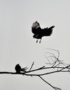 Meet two birds in the branches Stock Photography