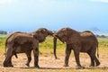 Meeting big elephants. Amboseli, Kenya Royalty Free Stock Photo