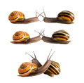 Meeting of two snails Royalty Free Stock Photo
