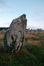 Megaliths in Carnac Royalty Free Stock Photography