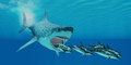 Megalodon attack a huge shark swims after a pod of striped dolphins Stock Photo