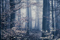 Melancholic foggy forest with bright leaves in the front Stock Photo
