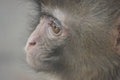 A melancholy monkey in the zoo Royalty Free Stock Photos