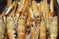 Meli melo of fresh prawns Royalty Free Stock Photo