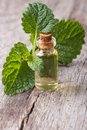 Melissa extract in glass bottle with fresh leaves on the table closeup Stock Images